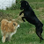 A Look into Dog Hackles
