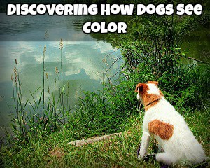 How Dogs See Color
