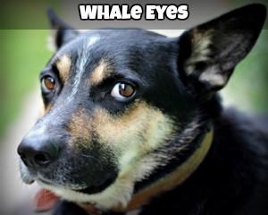 Whale Eyes