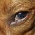 I am Your Dog's Third Eyelid