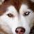 Stunning Dogs With Two Colored Eyes