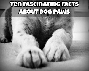 Ten Fascinating Facts About Dog Paws