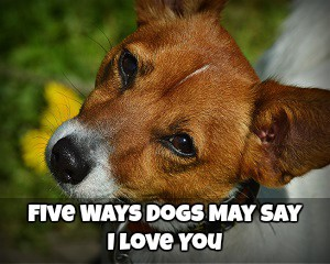 5 Ways Dogs May Say I Love You