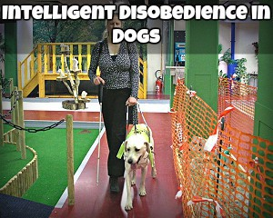 Intelligent Disobedience in Dogs