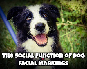 The Social Function of Dog Facial Markings