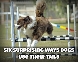 Six Surprising Ways Dogs Use Their Tails