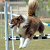 6 Surprising Ways Dogs Use Their Tails