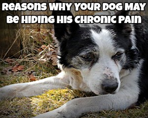 Reasons Why Your Dog May Be Hiding His Chronic Pain