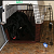 Do Dogs Really Perceive Their Crates as Dens?