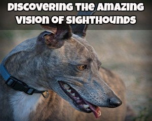 The Sighthounds