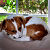 5 Dog Sleeping Position Meanings