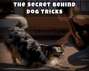 The Secret Behind Dog Tricks