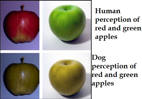 How Many Colors Do Dogs See Daily Dog Discoveries