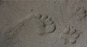 imprint dog paw
