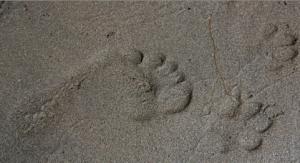 imprint dog paw