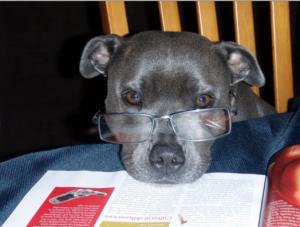 dog thymus