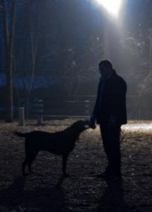 dog night vision