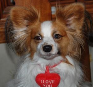 dog heart disease