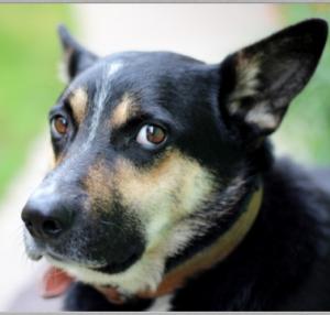 half moon eye dog