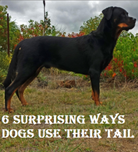 ways dogs uses their tails
