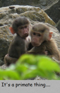 it's a primate thing