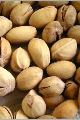 Dog Eat Pistachio Nuts