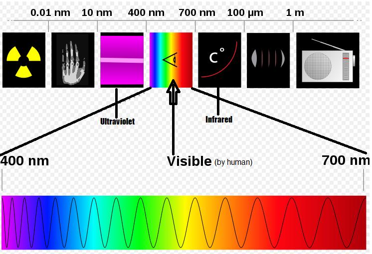ultraviolet dog