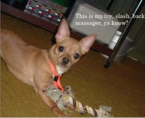 dog back massage