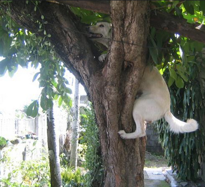Can Dogs Climb Like Cats