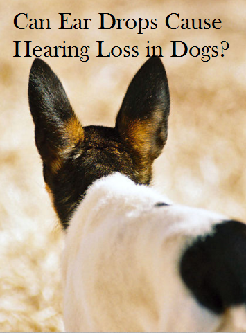 These Ear Drops May Be Making Your Dog Deaf Daily Dog