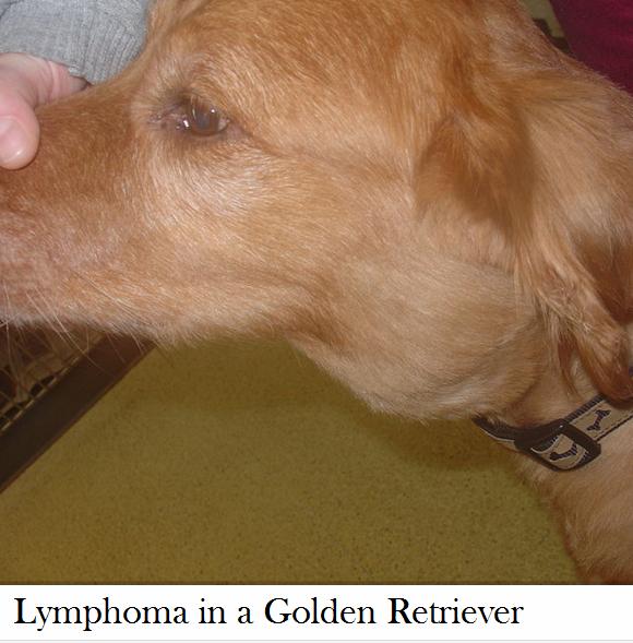 Large Lump On Side Of Dog S Neck