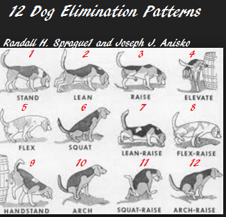 Twelve Dog Peeing Positions, How Does Your Dog Pee