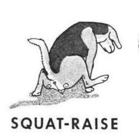 squat raise