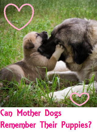 Do Mother Dogs Remember Their Puppies Daily Dog Discoveries