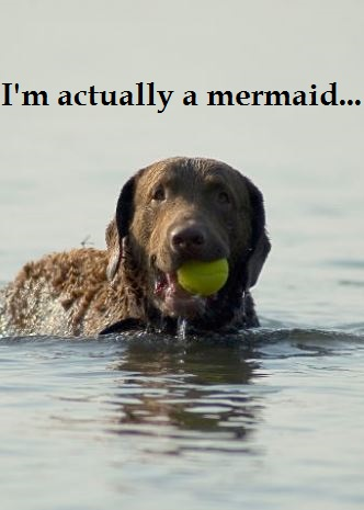 dogs that swim well