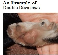 double dewclaws