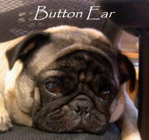 button ear