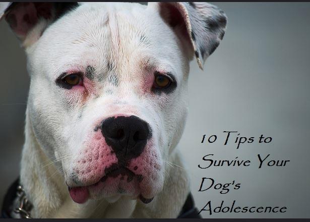 dog adolescence tips