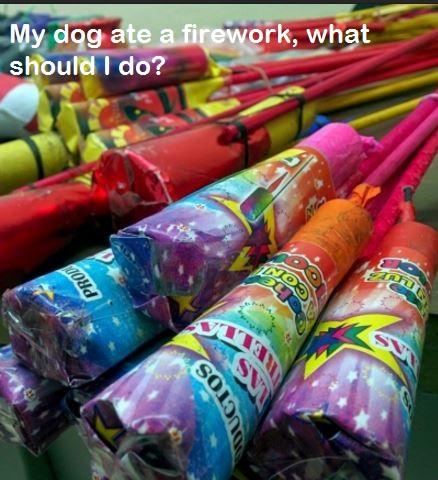 dog firework