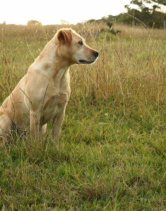 dog grasss