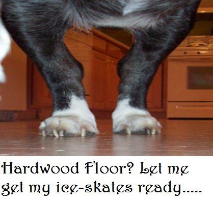 dog hardwood