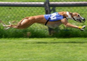 double suspension gallop