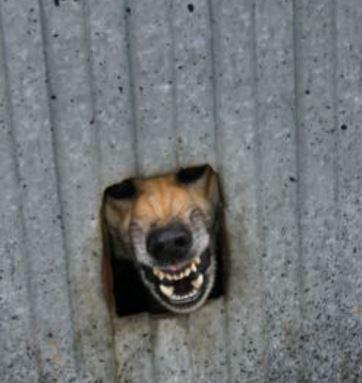dog aggressive terrirotial