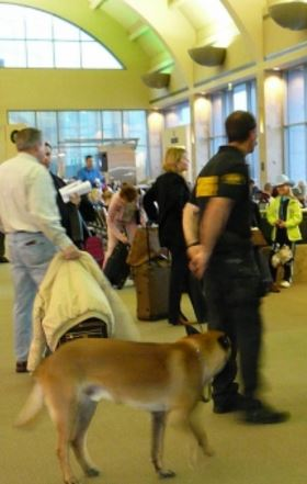 dog airport