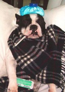 dog cold sneezing