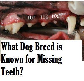 dog missing teeth