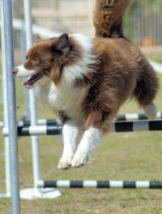 dog locomotion bones