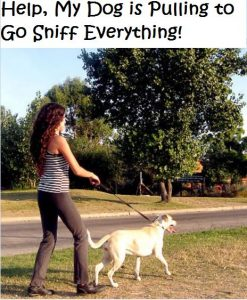 Dog Keeps Stopping As We Walk