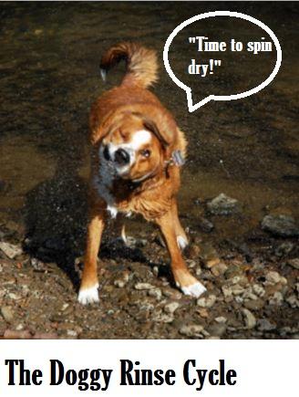 dog rinse cycle