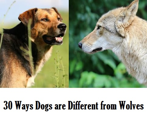 Which Dogs Are Most Like Wolves